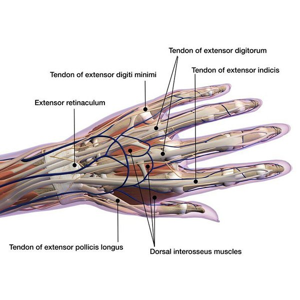 Work Related Injuries Carpel Tunnel Syndrome